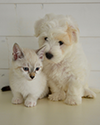 Preview Image of Pet Insurance showing a dog and cat